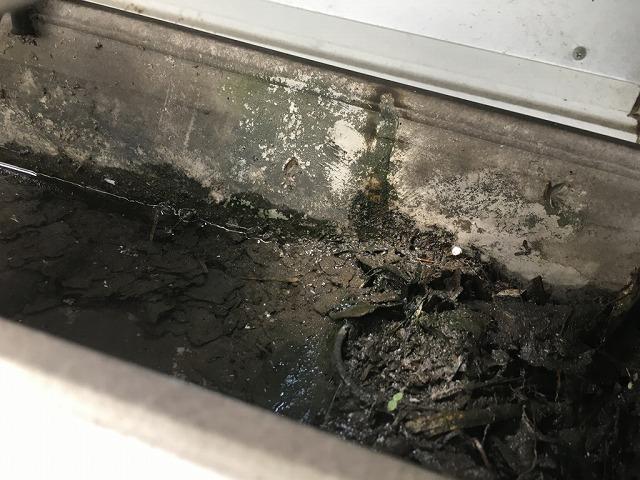樋のゴミ確認