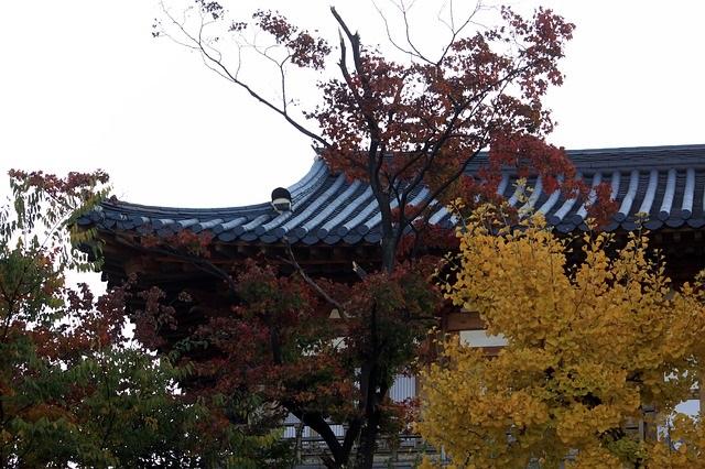 autumn-leaves-4617932_640