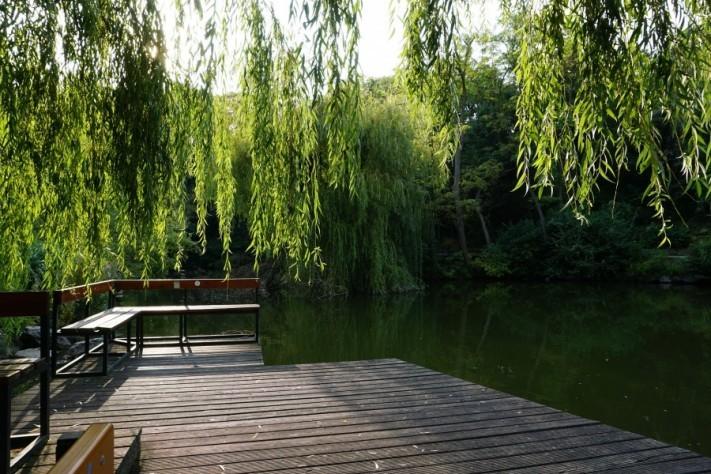 pond-4492194_1920-columns1