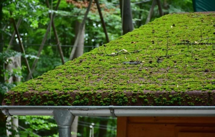 roof-2490864_1920-columns1