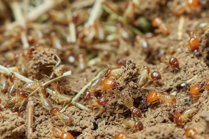 termites-3367347_1920-2-columns1